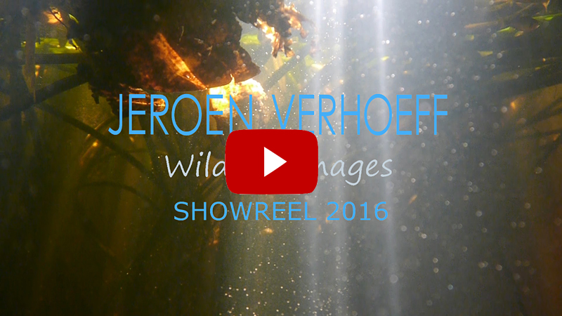 Wildlife showreel 2016 website click 800
