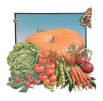 Jeroen Verhoeff Illustraties Voedsel