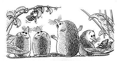 Jeroen Verhoeff Illustraties educatie