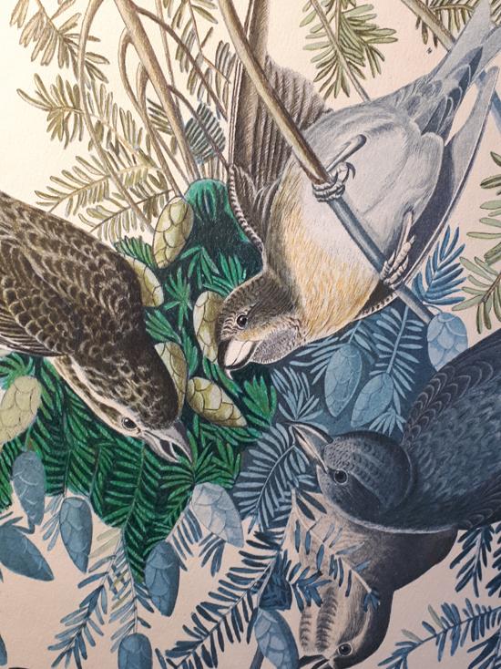 Restauratie Audubon vogelprint Jeroen Verhoeff