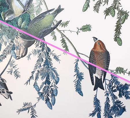 Crossbills Audubon plate restauration Jeroen Verhoeff 2