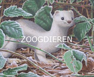 Jeroen Verhoeff Natuurschilderijen Zoogdieren