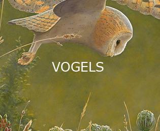 Jeroen Verhoeff Natuurschilderijen Vogels