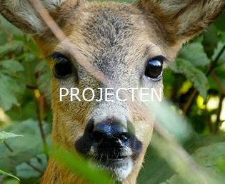 Jeroen Verhoeff Natuurfilm Projecten