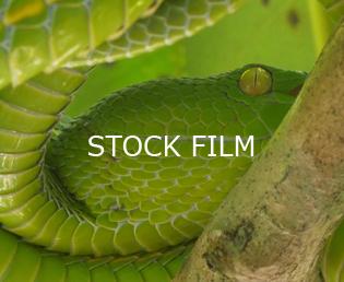 Jeroen Verhoeff Natuurfilm Stock film